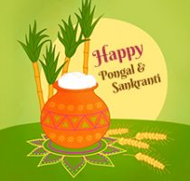 H'appy' Pongal and Makar Sankranti to all